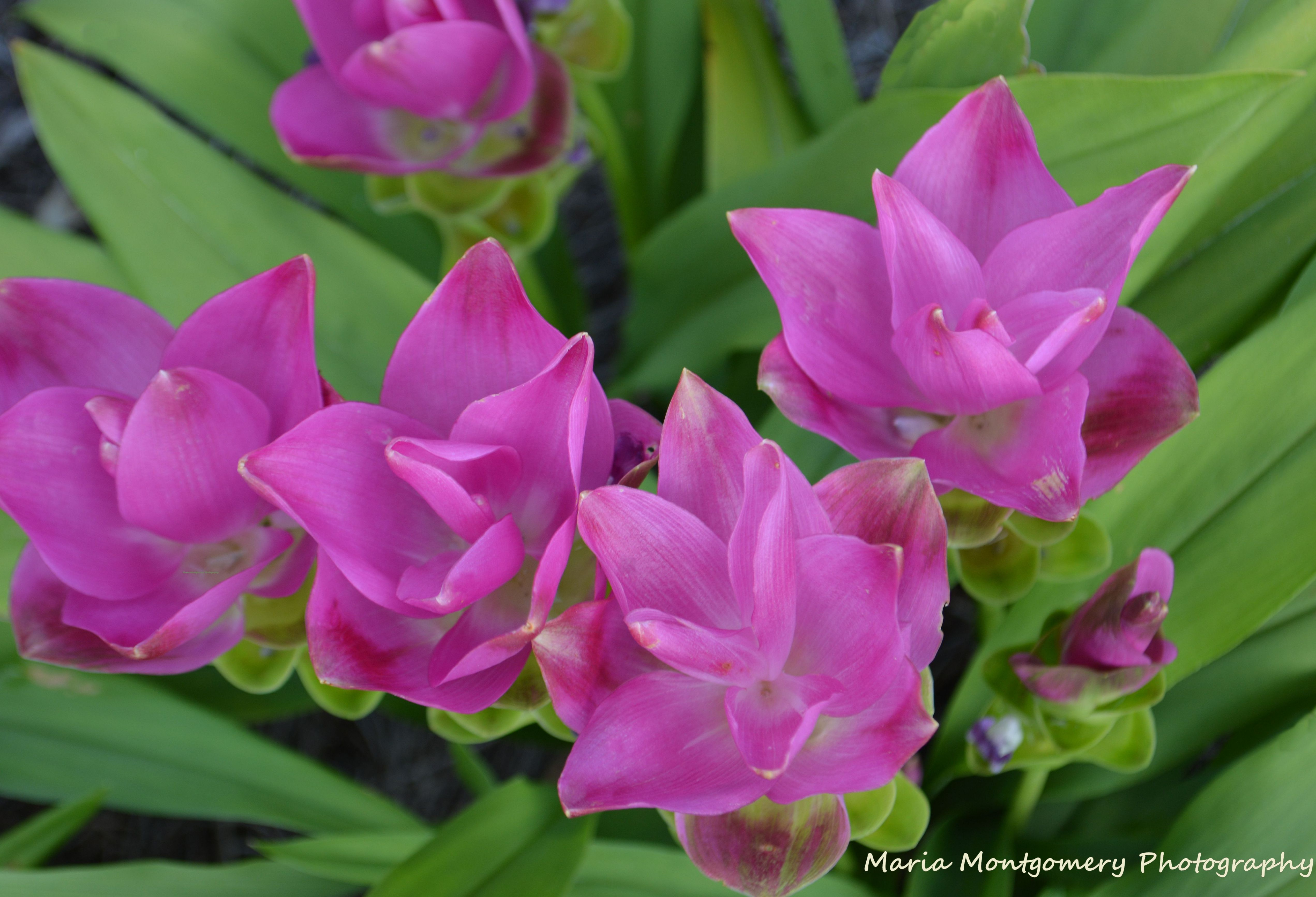 What are some sun loving flowers to plant here in zone 9 a in the tulip ginger izmirmasajfo