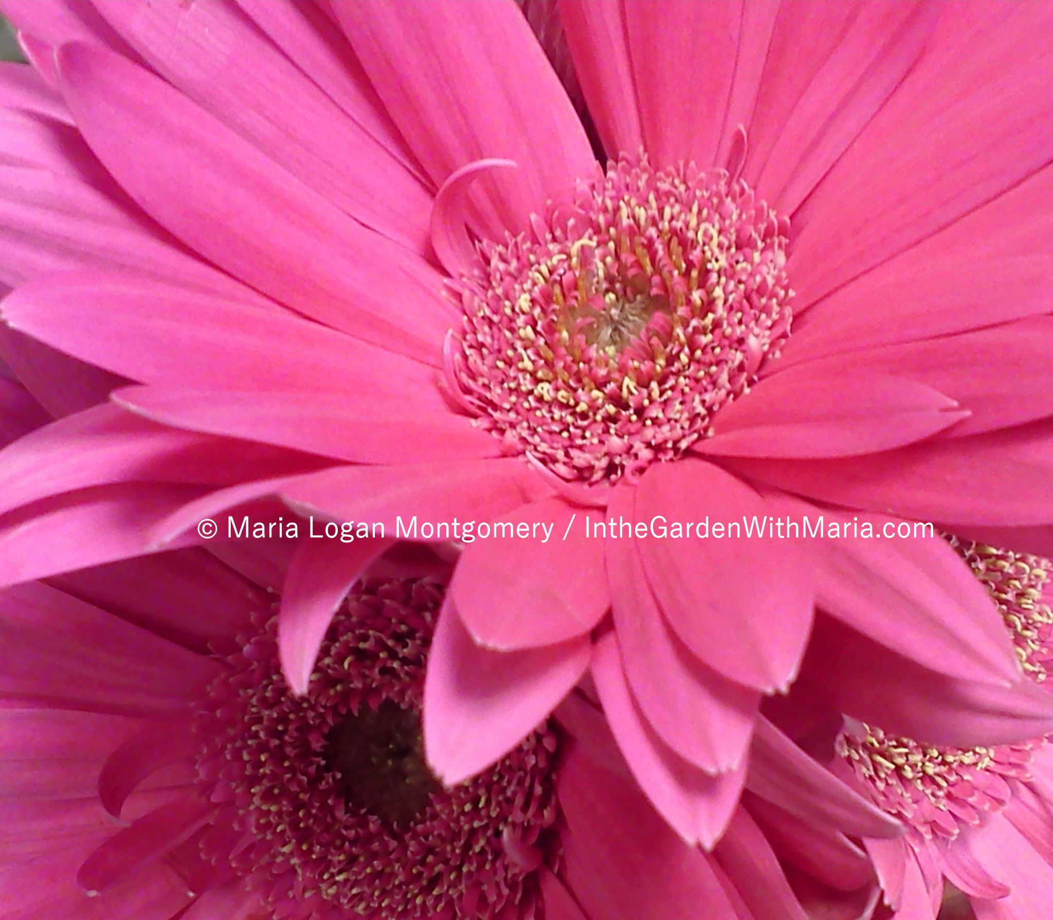 What are some sun loving flowers to plant here in zone 9 a in the gerbera daisy izmirmasajfo