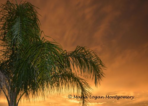 Palm Against Stormy Sunset - mlm