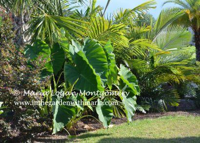 Backyard Foliage for Home Page