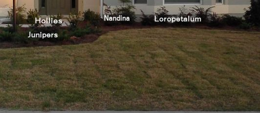 Front Yard Cropped - shrubs named