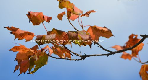 Orange-Green Branch - mlm c@