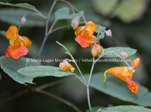 Wild Flowers at Viaduct - orange mlm c@