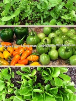 Veggie Collage - mlm c@