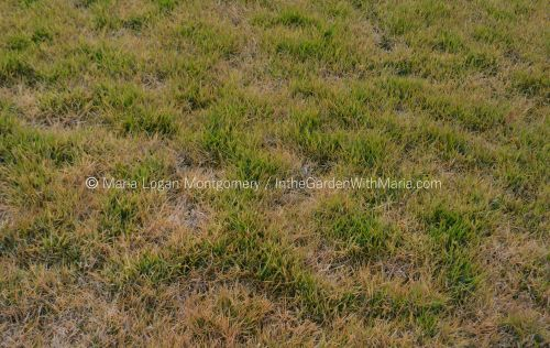 Grass in Seasonal Transition - mlm c@