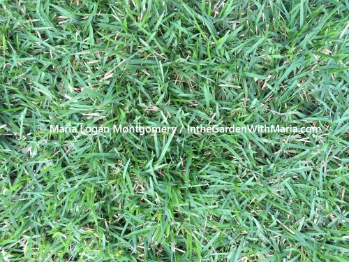 Green Grass - mlm c@
