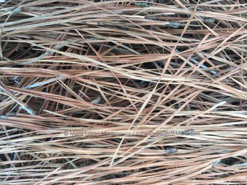 Pine Straw - mlm c