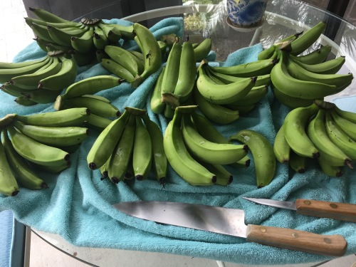 green-bananas